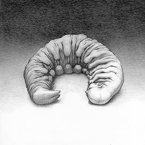 White Larva by Alex Andreev